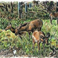 kob antelopes and egret