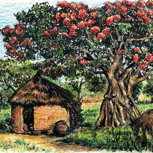 flame tree, hut, goat