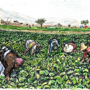 ghana women picking greens