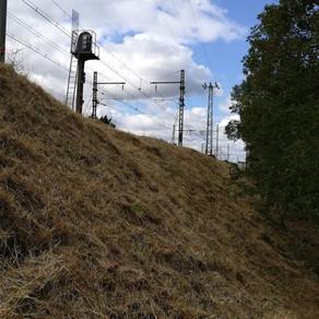 La SNCF et l'ONF débroussaillent en periode de nidification