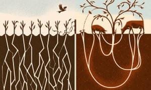 Pecuária também é sustentabilidade
