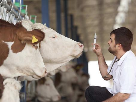Registros na produção de leite: requisitos legais e benefícios direto ao produtor.