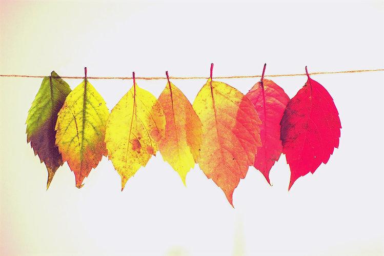 Colorful%2520Leaves_edited_edited.jpg