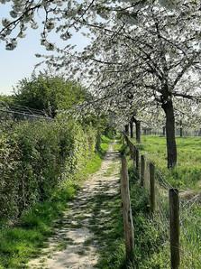 Fruitvallei Sint-Truiden