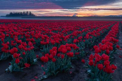 Pacific Northwest-2.jpg