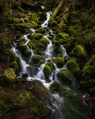 Pacific Northwest-3.jpg