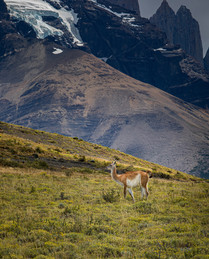 Patagonia-8.jpg
