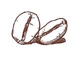 Bean_Sketch_alpha_edited_edited.png