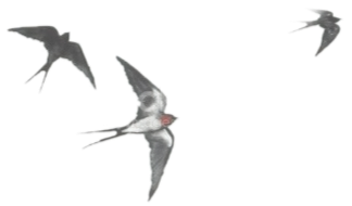 birds_edited.png
