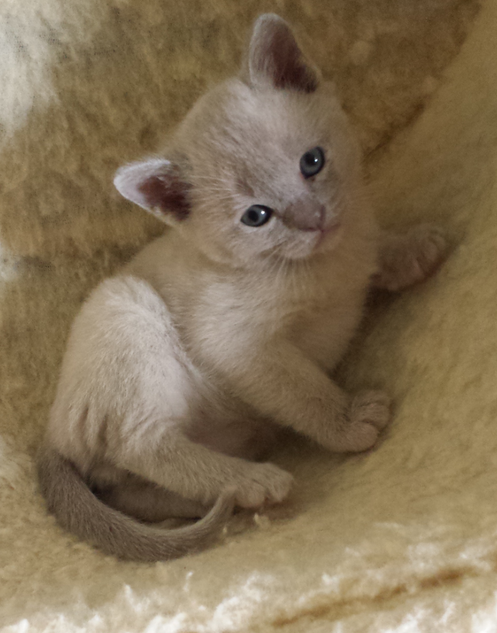 Hari at 5 weeks (12:05:2013).png