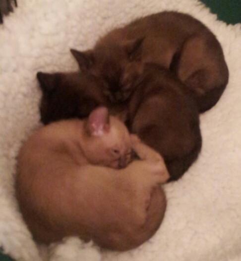 All a sleep together (10:11:2012).jpg