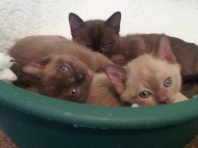 All three babies (26:10:2012).jpg