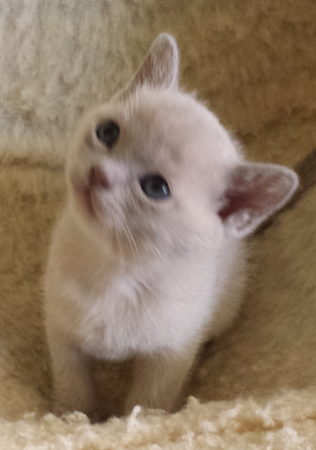 Lilybet at 5 weeks (12:05:2013).png