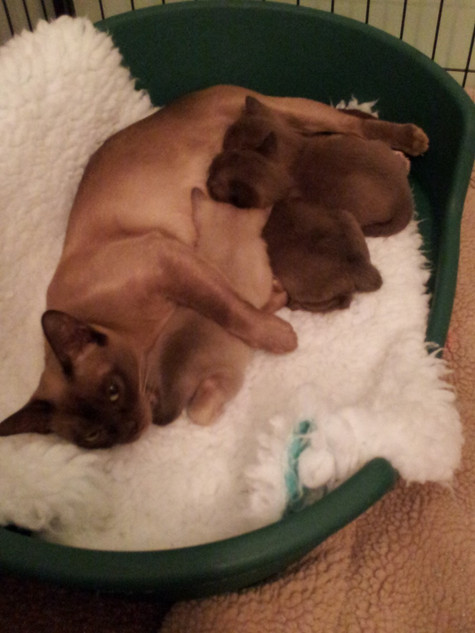 Eevee and the babies (12:10:2012).jpg