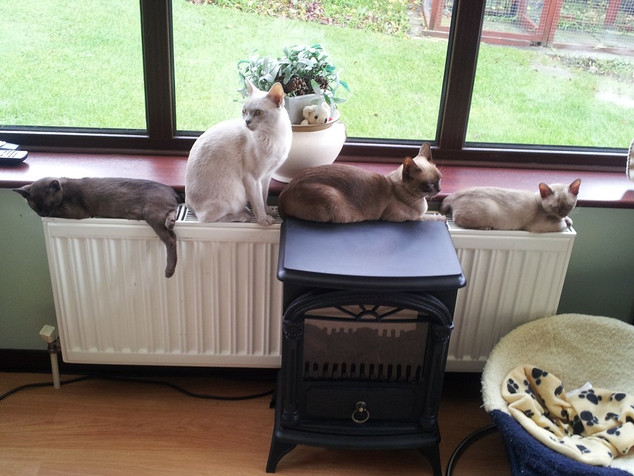 All keeping warm together (23:11:2012).j