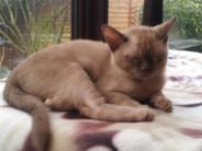 Lily a sleep (01:12:2012).jpg