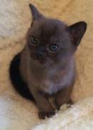 Stanley at 5 weeks old (19:10:2012.jpg