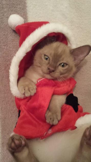 Santa's little helper! (07:12:2014).jpg