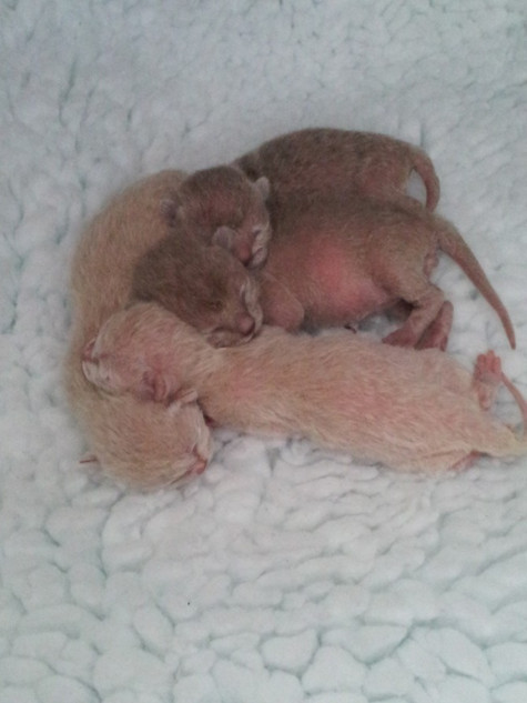 5 days old and we look more like kittens