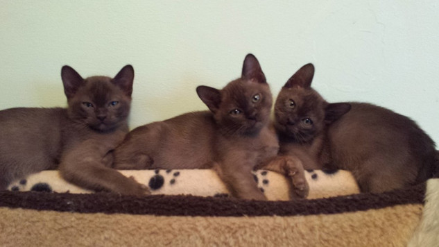 Three brown rascals (26:01:2014).jpg