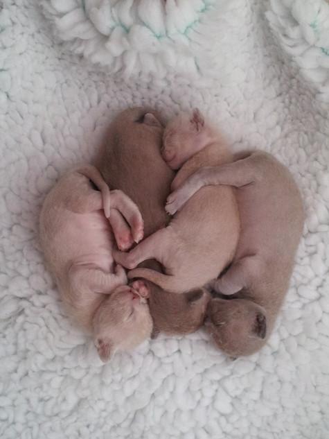 Four kittens in a pod (24:04:2013).jpg
