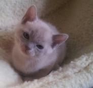 Lou-Lou at 6 weeks old.jpg