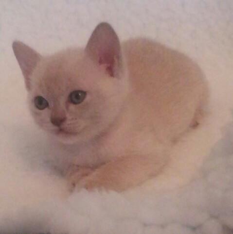 Maeva at 6 weeks old.jpg