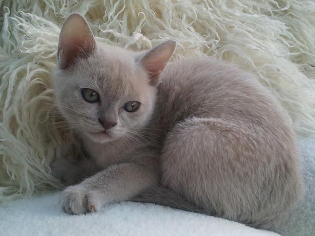 Maeva at 8 weeks(12:11:2011).jpg