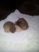 4 little bundles 16:09:2012.jpg