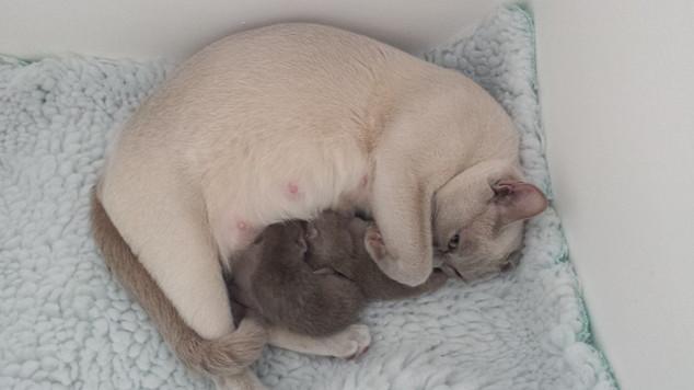 Maeva and newborn kittens