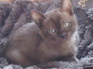 Max at 8 weeks(12:11:2011).jpg