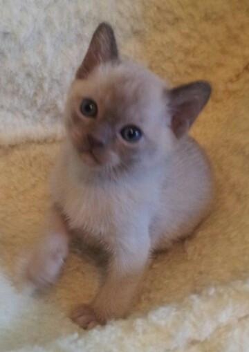 Lily at 5 weeks old (19:10:2012).jpg