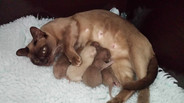 1 day old kittesn(01:12:2013).jpg
