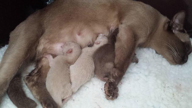 Eevee's newborn kittens (28:09:2014).jpg