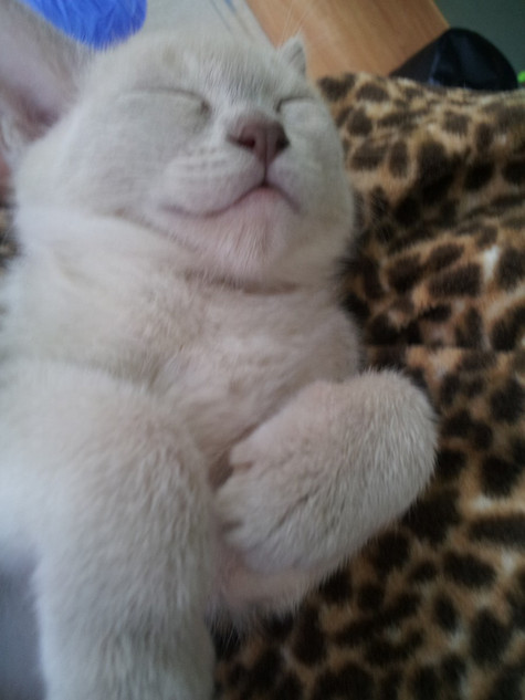 Maeva sleeping. Such a hard life.jpg