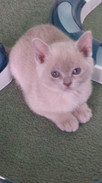 Beautiful Lilybet 7 wks (26:05:2013).jpg