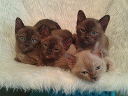 The Gang aged 6 weeks (15:01:2014).jpg