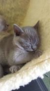 Sleepy Yonko (26:05:2013).jpg