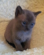 Ollie-Jay at 5 weeks old (19:10:2012).jp