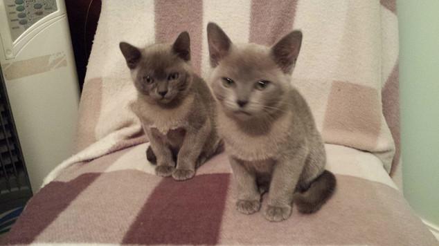 Bryadajhay Mabel Syrup & Mia Leigh (23:1