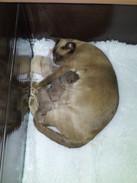 Eevee's newborn kittens 14:09:2012.jpg
