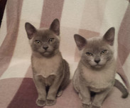 Beautiful Mia and Mabel (07:12:2014).jpg