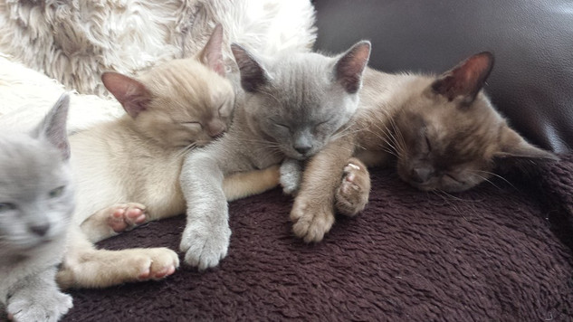 Its a hard life being a kitten! (26:11:2