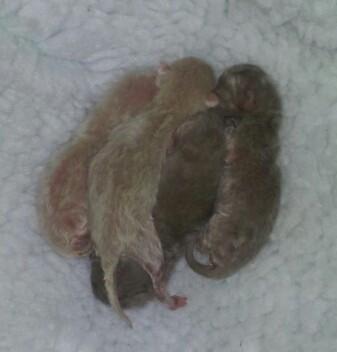 Four tiny new born kittens (07:04:2013.j
