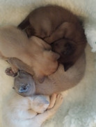 Eevee's babies together (27:10:2014).jpg