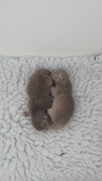 What a pair of twins (23:09:2014).jpg