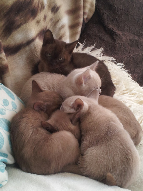 t's good to sleep in a heap!!.jpg