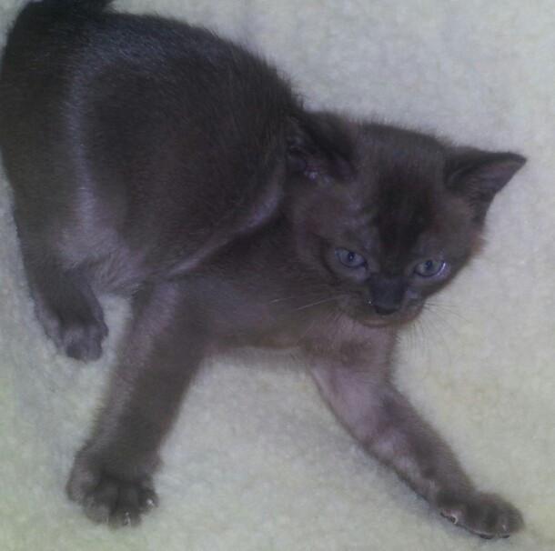 Max at 6 weeks old.jpg