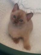 Sweet Lily (25:10:2012).jpg