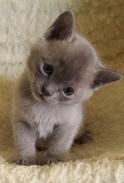 Yonko at 5 weeks (12:05:2013).png